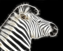Fractal Zebra Illustration