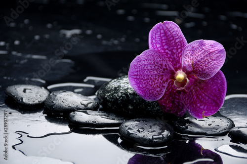 Foto auf Gartenposter Spa still life with pebble and orchid with water drops