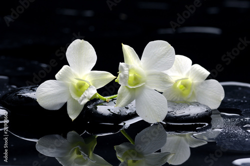 Deurstickers Spa Purple orchid and black stones with reflection