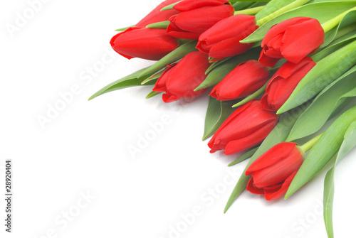 Fototapeta Red tulips obraz na płótnie