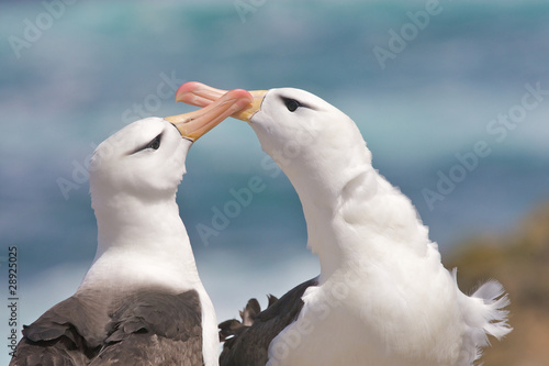 Fotografie, Tablou  Albatross on the Beach