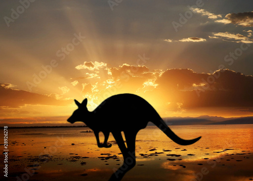 Deurstickers Kangoeroe kangaroo on the sunset