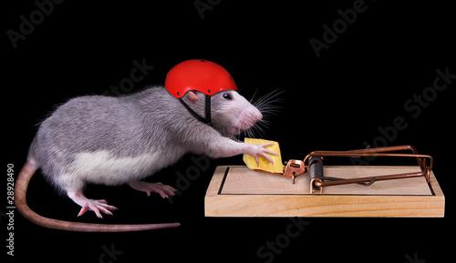 Foto rat cheating death