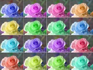 Panel SzklanyPopart roses
