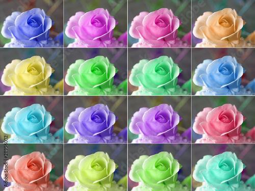 Popart roses - 28956002