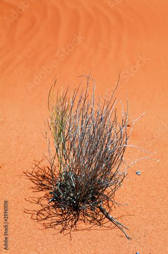 Fotografie, Obraz Busch in der Wüste