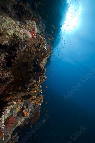 Staande foto Koraalriffen Tropical reef and marine life in the Red Sea.