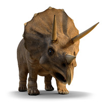 3d Triceratops About To Charge