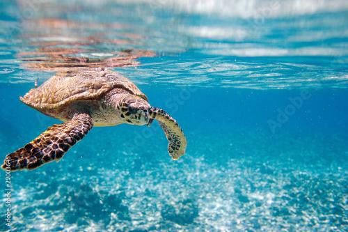 Fotografie, Obraz  Kareta pravá moře