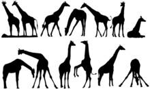 Vector Silhouettes Of Giraffe