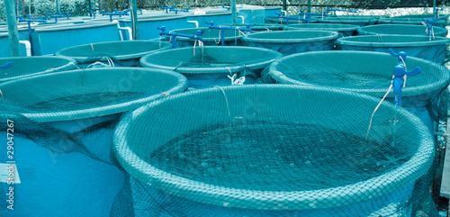 Photo Agriculture aquaculture farm