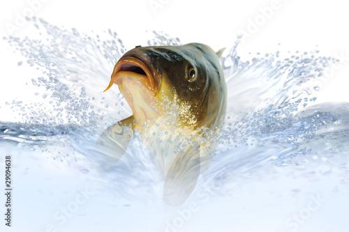 Valokuvatapetti Fische 7