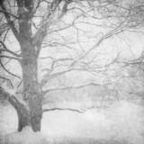 grunge obraz zimowego krajobrazu - 29095012