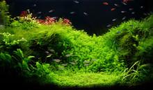 Nature Freshwater Aquarium In ...