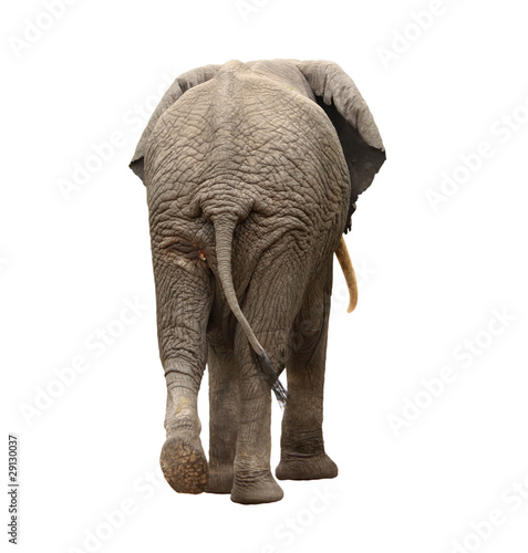 Foto op Aluminium Olifant elephant walking away