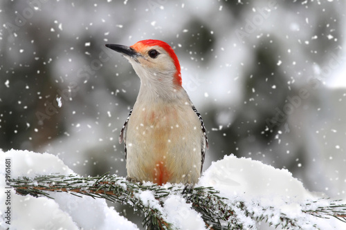 Aufkleber - Woodpecker in snow