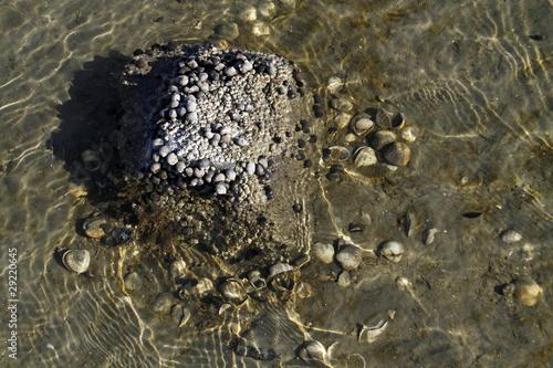 Wasserschnecken und Seepocken