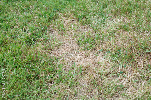 Deurstickers Droogte Unhealthy grass