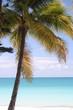 palmier sur lagon