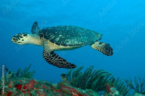 In de dag Koraalriffen sxm5597