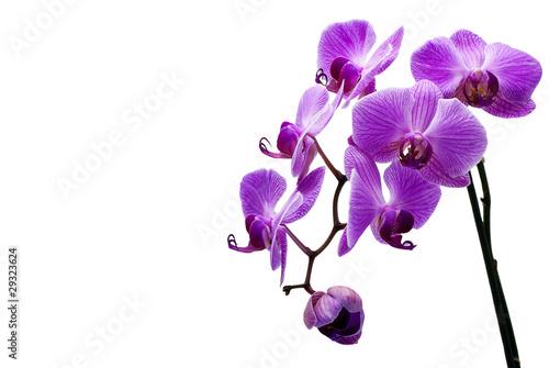 Foto auf AluDibond Orchideen Orchidee