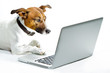 canvas print picture - dog in front of laptop