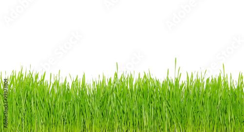 Photo sur Aluminium Herbe green grass