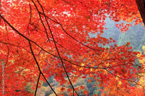 Poster de jardin Rouge 奥津渓谷の紅葉