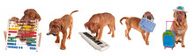 Five Dogue De Bordeaux Puppies And Their Hobbies/occupations