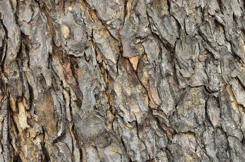 Keuken foto achterwand Baobab old bark texture