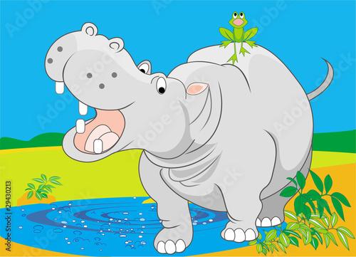 Photo Hippopotamus