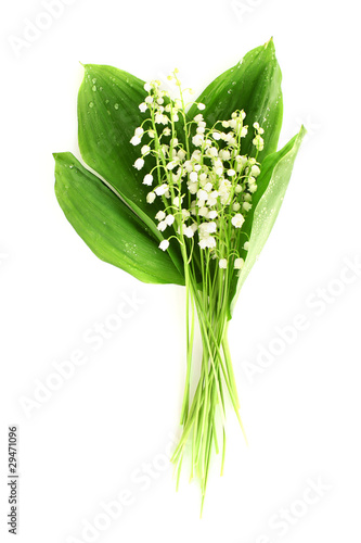 Poster Muguet de mai Lily-of-the-valley on white