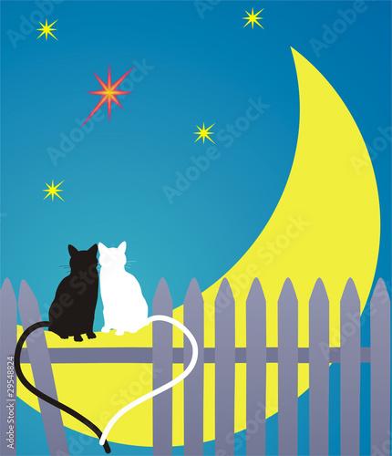 Printed kitchen splashbacks Cats cats on the Moon