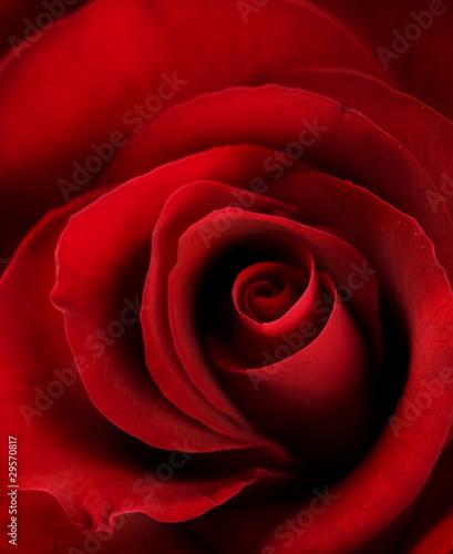 Naklejki o różnych zastosowaniach czerwona-roza-z-bliska