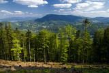 Fototapeta  - Piękny widok na szczyt Skrzycznego. Beskidy latem