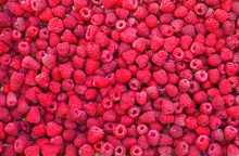 Delicious First Class Fresh Raspberries