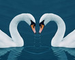 canvas print picture - Two swans in the Calm Morning Lake - Valentine image with heart
