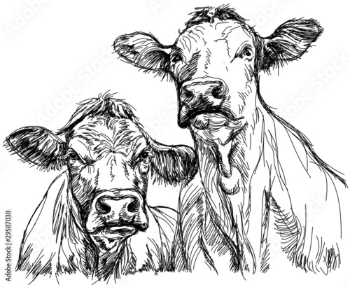 Leinwand Poster two cows - black and white sketch