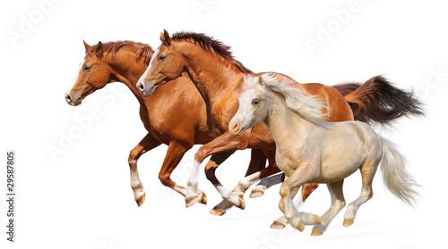 Fototapeta Three horses gallop