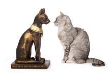 Chat Regardant Une Statue De C...
