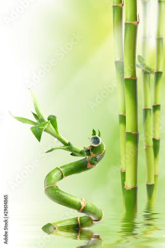Doppelrollo mit Motiv - Bamboo I