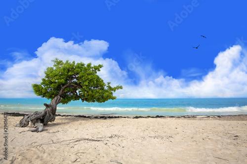 Photo  Divi tree