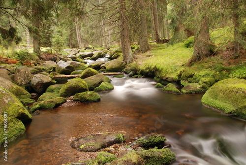 Fototapety, obrazy: Mountain brook