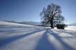 canvas print picture - Linde Baum im Winter im Schnee