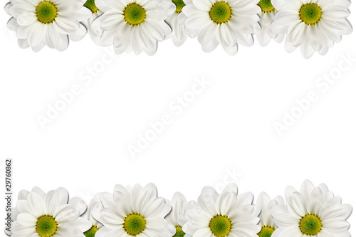 Recess Fitting Narcissus Flowers frame on white background