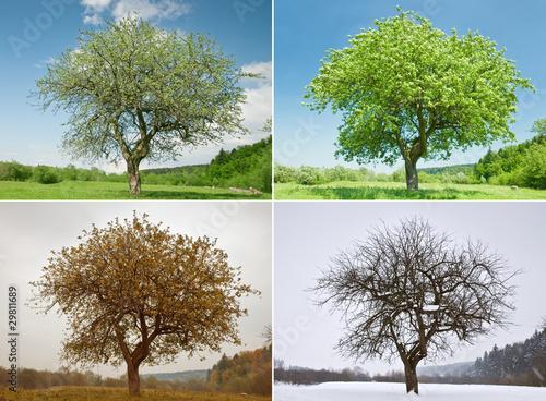 tree Fototapet