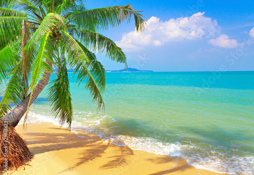 Foto op Canvas Eiland tropical beach with coconut palm