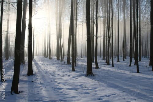 Foto auf Acrylglas Wald im Nebel Path in the winter coniferous forest at dawn
