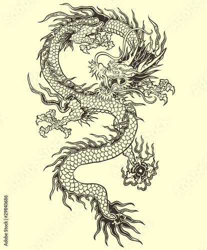 Photo  Dragon Vector