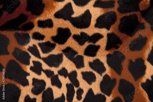 Fotografie, Obraz  Leopardenfell